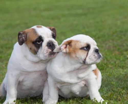 训狗-五部曲经典版 怎么训练狗看这一部视频就够了